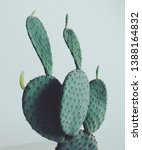 Close Up View Of Potted Cactus  ...