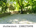 stony path and tree view | Shutterstock . vector #1388270498