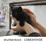 Stock photo gorgeous black kitten at the age of month born a street cat in a garage box during the photo 1388345438