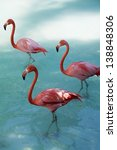 red flamingo dancing | Shutterstock . vector #138848306