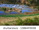 samaba rice terrace fields in... | Shutterstock . vector #1388493038