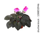 Small photo of Pink Saintpaulia Hello Aglitter flowers in ceramic pot isolated on white background
