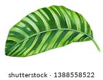 green leaf on isolated white...   Shutterstock . vector #1388558522