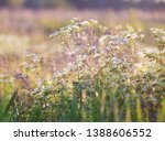 small white flowers in a field ... | Shutterstock . vector #1388606552