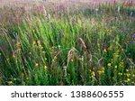 abundance of blooming wild... | Shutterstock . vector #1388606555