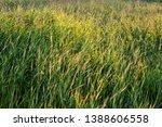 green grass meadow in summer... | Shutterstock . vector #1388606558
