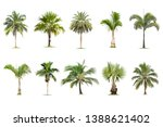 coconut and palm trees isolated ... | Shutterstock . vector #1388621402