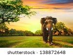 elephant on sunset   Shutterstock . vector #138872648