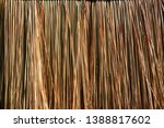 colorful golden dry grass lines ... | Shutterstock . vector #1388817602