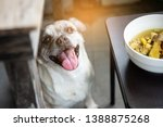 Hungry Half Breed Pug And Spit...