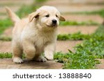 Stock photo playful puppy running 13888840