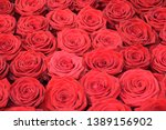 Stock photo a thousand roses of valentine s day 1389156902