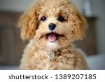 Stock photo puppy smiling at the camera 1389207185