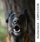 gorgeous portrait of a barking...   Shutterstock . vector #1389213158