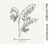 hand drawn dicentra....   Shutterstock .eps vector #1389242798