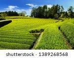 tea plantation with clear sky... | Shutterstock . vector #1389268568