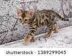 Stock photo bengal kitten playing in the background 1389299045