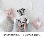 Stock photo dalmatian dog lying on her back with paws up wishing for a tummy rub dog in bed resting and 1389351098