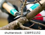 Man with gloves is cutting branches from tree, trimming - stock photo