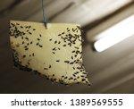 Homemade fly trap  sticky fly...