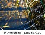 long necked swamp tortoises... | Shutterstock . vector #1389587192