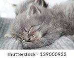 Stock photo the kitten sleeps 139000922