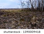 ecological catastrophe  large... | Shutterstock . vector #1390009418