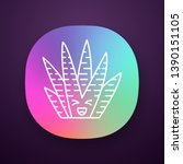 zebra cactus app icon. cacti...