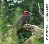 southern ground hornbill in... | Shutterstock . vector #1390211285