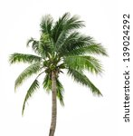 Coconut Palm Tree Isolated On...