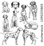 Set of hand drawn ink dogs sketches. Dalmatian, watchdog, a dog of a white, short-haired breed with dark spots. Vintage ink animals illustration. Isolated on white - stock photo