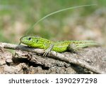 lizard   green beauty with... | Shutterstock . vector #1390297298