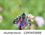 Butterfly On A Summer Cardoon...