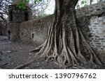 Roots And Branches Of Large...