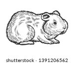 Stock vector hamster rodent pet animal sketch engraving vector illustration scratch board style imitation hand 1391206562