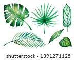beautiful set of tropical...   Shutterstock . vector #1391271125