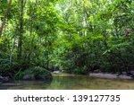 Tropical Rainforest River