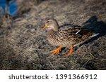 wildlife animals wallpapers and ...   Shutterstock . vector #1391366912