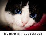 wildlife animals wallpapers and ...   Shutterstock . vector #1391366915