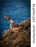 wildlife animals wallpapers and ...   Shutterstock . vector #1391366918