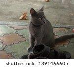 Grey Kitten On The Floor Near...