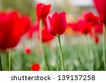 flowers | Shutterstock . vector #139157258