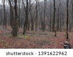 forest landscape. foggy... | Shutterstock . vector #1391622962