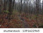 forest landscape. dark... | Shutterstock . vector #1391622965