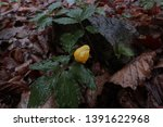 small yellow flower bud with... | Shutterstock . vector #1391622968