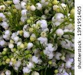 macro photo nature spring... | Shutterstock . vector #1391951405