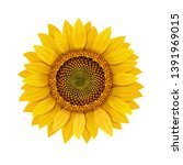 sunflower realistic isolated ... | Shutterstock .eps vector #1391969015