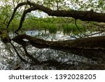 fallen tree and its reflection... | Shutterstock . vector #1392028205