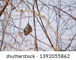 selective focus photo. nest of...   Shutterstock . vector #1392055862