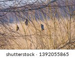 selective focus photo. nest of...   Shutterstock . vector #1392055865